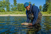 Fishing, fly fishing for trout,  brown trout fishing