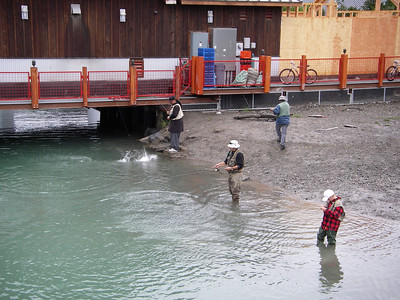 Combat fishing