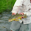 Madison River Aug 2014
