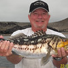 Calico bass caught on a fish trap plastic lure.