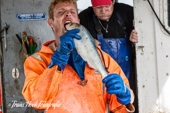 Dutch people eat raw herring, but this one is  too big.  Hollanders eten rauwe haring, maar deze is te groot.