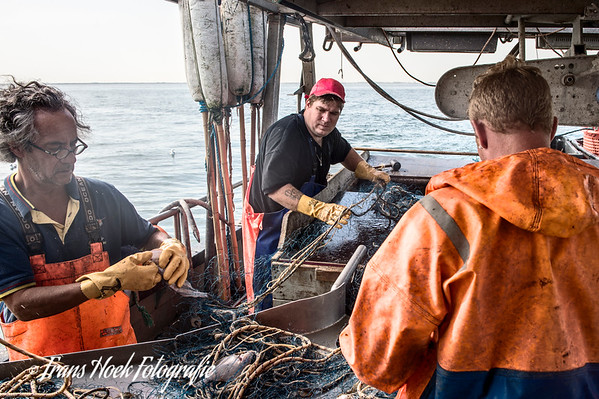 The fish is taken out of the net. / De vis wordt uit het net gehaald.