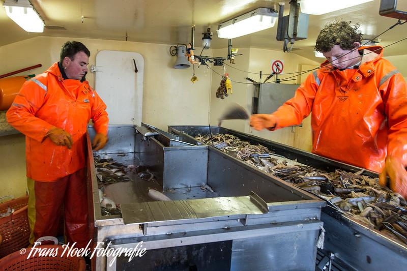 Sorting the fish / Vis sorteren.