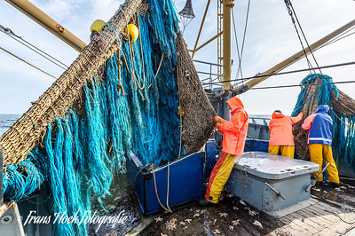 The last remaining fish is shaken out of the net. / De laatste rest vis wordt uit het net geschud.