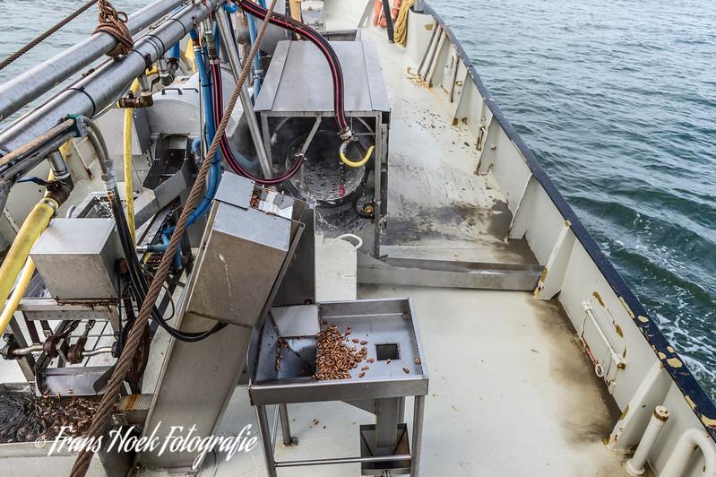 The catch of shrimps is sorted and treated on deck.  De garnalen worden gesorteerd en behandeld aan dek.