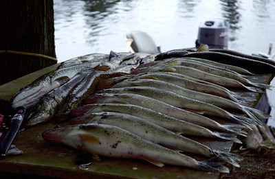 Pitre Fishing Retreat May 2008