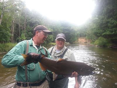 Salmon 2014
