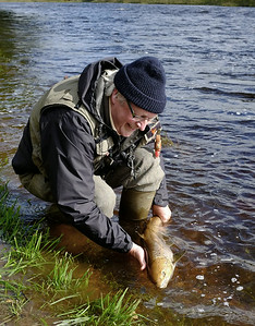 Dee week 2014, returning a salmon at the Sands Pool, Ballogie.