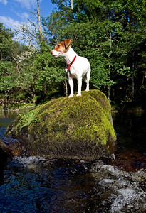 Fishing dog, Pippa, Alness