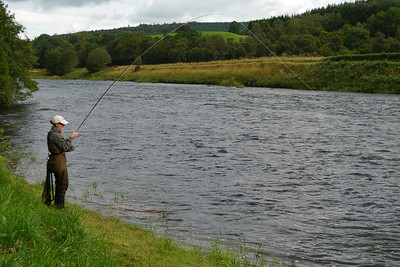 Playing a salmon at Ballogie in August.