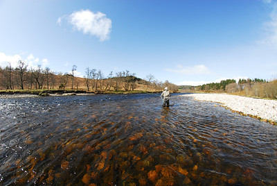 Fishing the Dee on a bright spring day.
