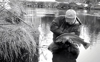 Upper Connecticut River Trophy trout. Rick McNeil Photo