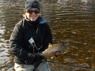 Connecticut River Brown, February 16, 2012.