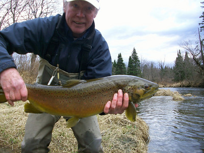 Trophy Connecticut River brown trout