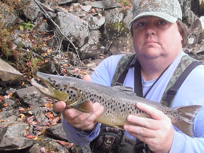 Landlocked salmon in the fall on the Upper Connecticut River in Pittsburg, NH.