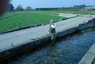 Playing a trout at the Vitacress watercress farm