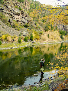 Fly Fisher on the Gunnison River