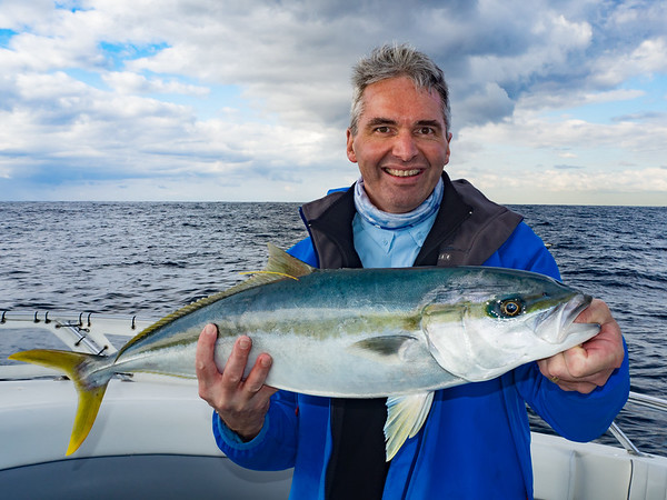Yellowtail kingfish caught on Oceanhunter Charters at 12 Mile Reef, 19 August 2015