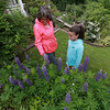 Betty Reid the director of the North County Land Trust and her granddaughter Mia Curtis, 9, check out the lupine flowers in the garden of Dr. Steven Manalan's house in Fitchburg. His garden will be one of the houses on the garden tour Saturday, June 23, 2018. SENTIENL & ENTERPRISE/JOHN LOVE