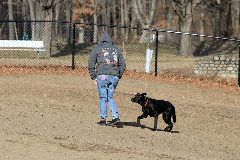 Lindsay Russo from Leominster hangs out with her dog Roosa a labernese on Wednesday afternoon at the Fitchburg Dog Park. SENTINEL & ENTERPRISE/JOHN LOVE