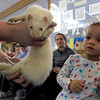 Animal Adventures, a family zoo and rescue center, from Bolton visited the Fitchburg Public Library on Thursday morning, December 28, 2018. The program was funded by the United Way's Strengthening Families grant. Drew Shaheen from the zoo holds a ferret for the kids to see, learn about and pet. Zoe Bennett, 2, things about petting the ferret. SENTINEL & ENTERPRISE/JOHN LOVE