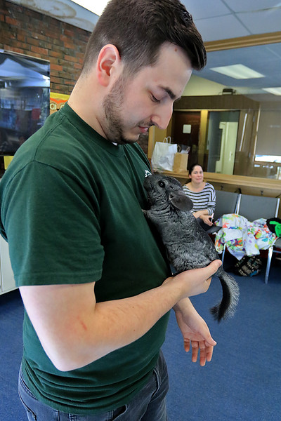 Animal Adventures, a family zoo and rescue center, from Bolton visited the Fitchburg Public Library on Thursday morning, December 28, 2018. The program was funded by the United Way's Strengthening Families grant. Drew Shaheen from the zoo holds a chinchilla for the kids to see, learn about and pet. SENTINEL & ENTERPRISE/JOHN LOVE
