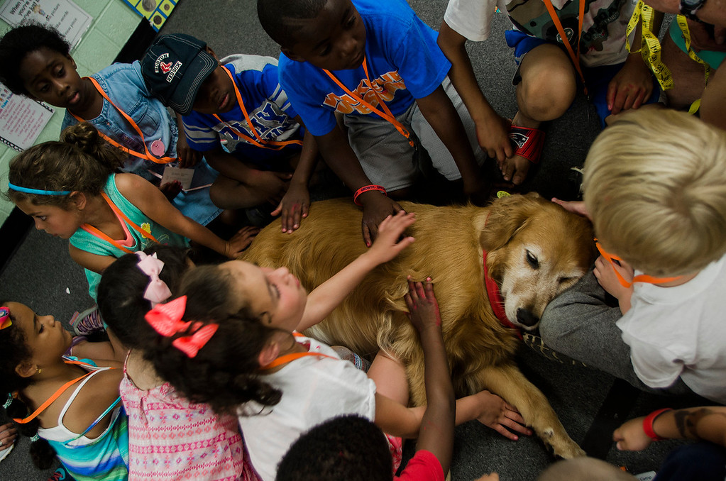 . Students pet Maddie, a therapy dog from the group TheraPAWS during the Fitchburg Public Schools Journeys Summer Camp at Crocker Elementary School on Thursday, July 6, 2017. SENTINEL & ENTERPRISE / Ashley Green
