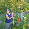 Vicki Doiron Fucarile takes a break from her work clearing veterans' markers at Forest Hill Cemetery in Fitchburg on Sept. 24, 2016.<br /> PHOTO SUBMITTED BY DON SPARKS