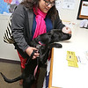 Zelda a one and half year old black lab mix was the dog that donated the most money to the Fitchburg dog park fundraiser  so she is now called the number one dog in Fitchburg and got the number one dog tag. With Zelda is her mom Erika Ferreira in the City Clerks office. SENTINEL & ENTERPRISE/JOHN LOVE