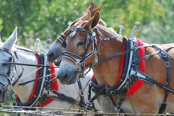 Ohio Horse Plowing Contest