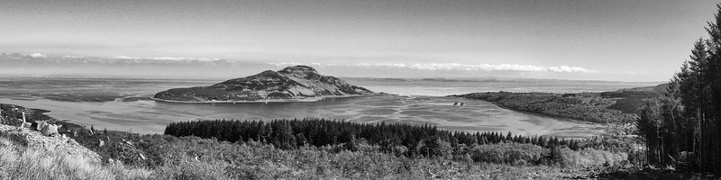 Holy Isle from the Forestry Path