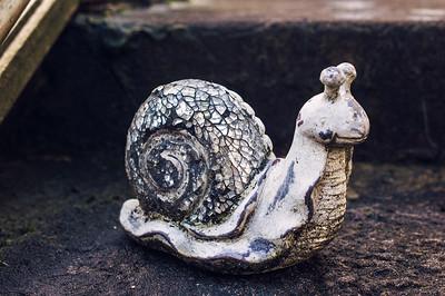 Uncommon Garden Snail