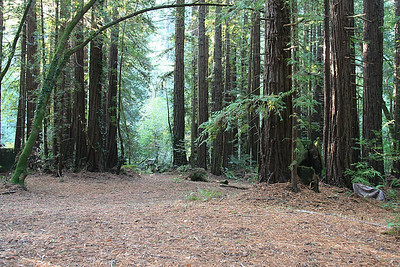 …there is another acre of forest leading to a dry creekbed
