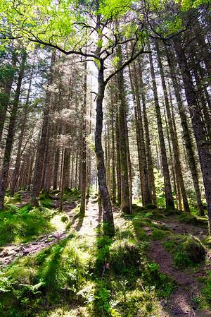 Illuminated Tree, Norway