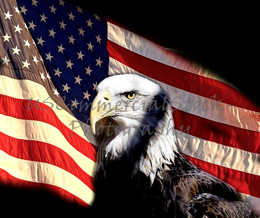 American Bald Eagle with US Flag