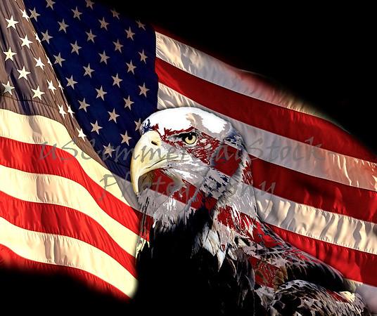 American Bald Eagle and US Flag