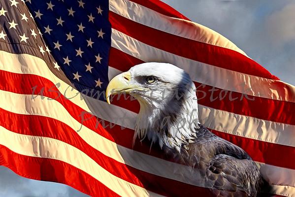 Bald Eagle on American Flag