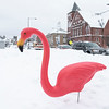 It was the annual Flamingo Day in the City of Leominster on February 2, 2021. The Don Featherstone flamingo was placed on Monument Square at 8 a.m. and he did not see his shadow. SENTINEL & ENTERPRISE/JOHN LOVE