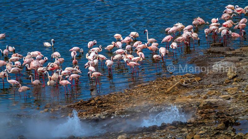 Aerial view of Lesser flamingos and hot springs  at lake Bogoria.