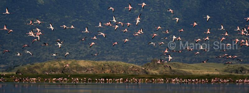 Lesser flamingos at Lake Natron