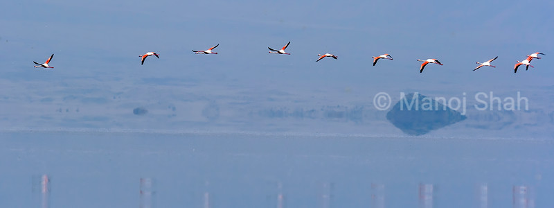 Flight of lesser flamingos over Lake Natron, Tanzania.