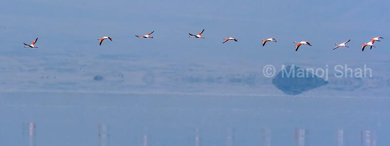 Flight of lesser flamingos over Lake Natron, Tanzania.