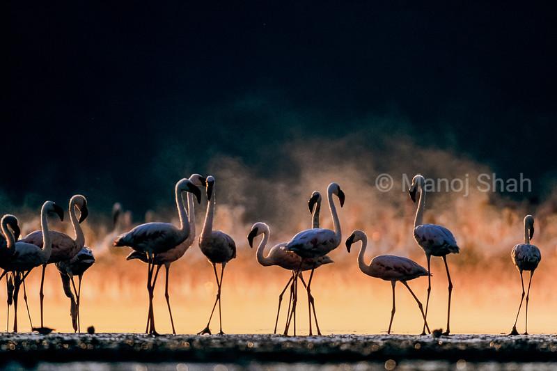 Greater and lesser flamingos early morning at Lake Nakuru, Kenya