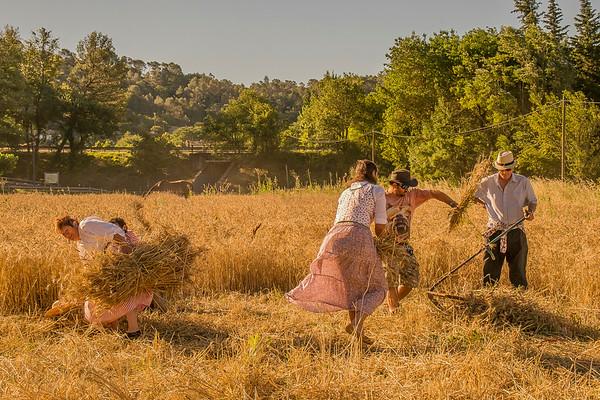 Moisson en Provence - VII