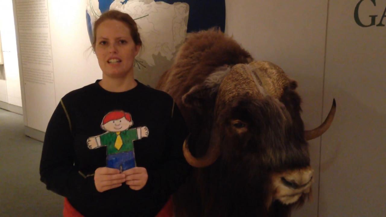 Flat Buchanan meets a musk ox at the museum.