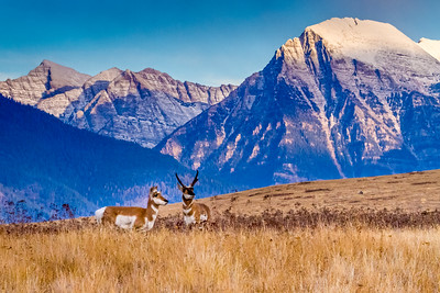High Wide and Handsome - St. Ignatius, Montana