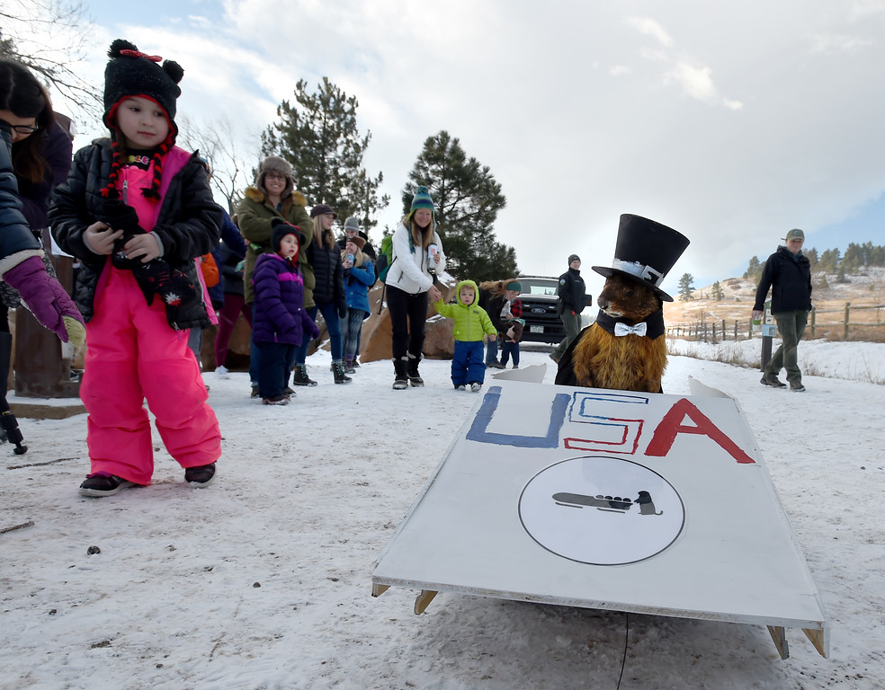. Flatiron Freddy came down the hill in a bobsled in honor of the Winter Olympics.  Flatiron Freddy, Boulder\'s answer for Groundhog Day,  made his annual appearance at Chautauqua Park on Friday and did see his shadow. For more photos and a video, go to dailycamera.com. Cliff Grassmick  Photographer  February 2, 2018