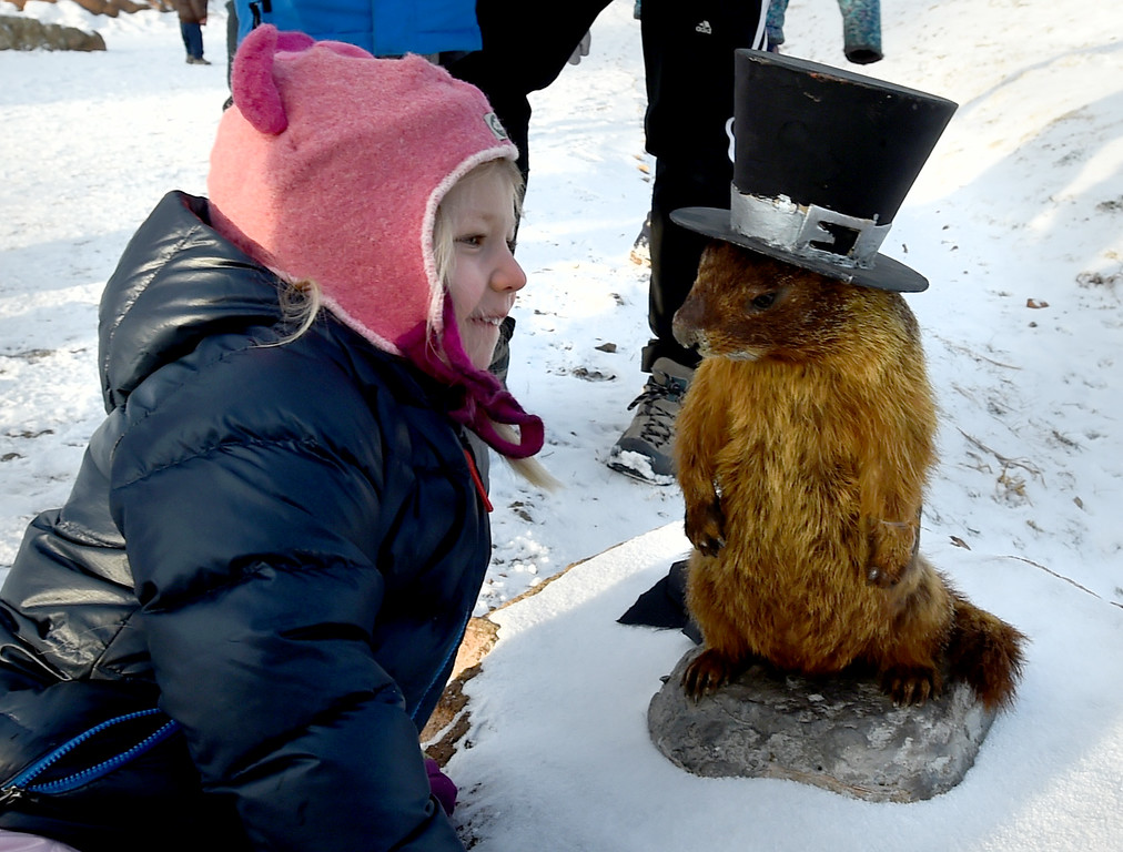 . Elsa Hansen, 4, gets close to Flatiron Freddy after his appearance on Friday. Flatiron Freddy, Boulder\'s answer for Groundhog Day,  made his annual appearance at Chautauqua Park on Friday and did see his shadow. For more photos and a video, go to dailycamera.com. Cliff Grassmick  Photographer  February 2, 2018