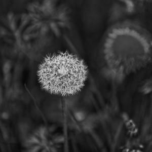 _MG_4214_©Ch  Mouton