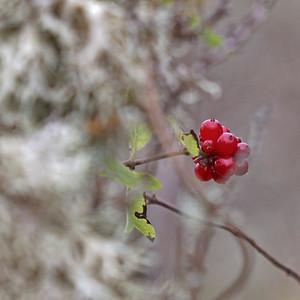 Divers fleurs II